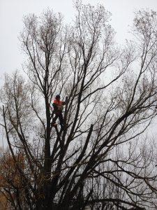 Demontage arbre Dampierre